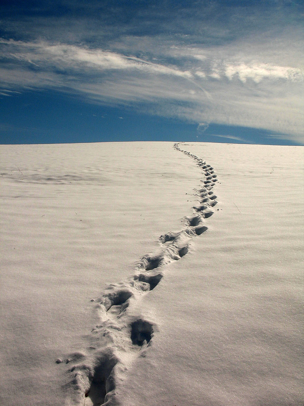 Our Own Set of Footprints - 7 Days Time